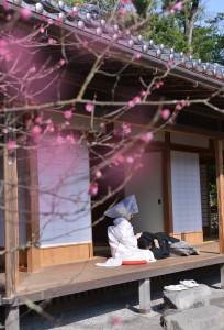 玉里庭園で梅を見ながら