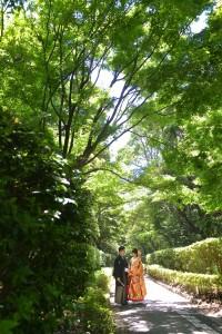 yoshinokoennomidori