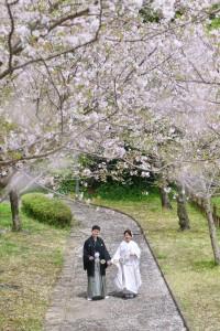 tagayamakoen-sakura