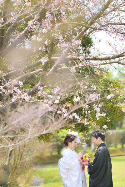 http://www.with-pg.jp/data/wp-content/uploads/2017/05/yoshinokoen-sakuranositade-400x600.jpg