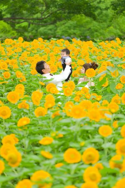 http://www.with-pg.jp/data/wp-content/uploads/2017/08/himawari-1-400x600.jpg